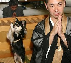 Japanese praying dog