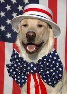 Patriotic dog 1